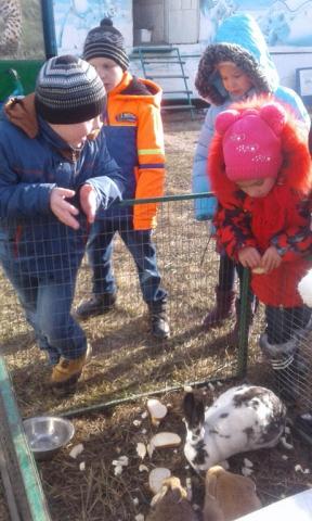Встреча с животными