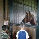 Погладили пони