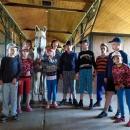 Узнали о породах лошадей